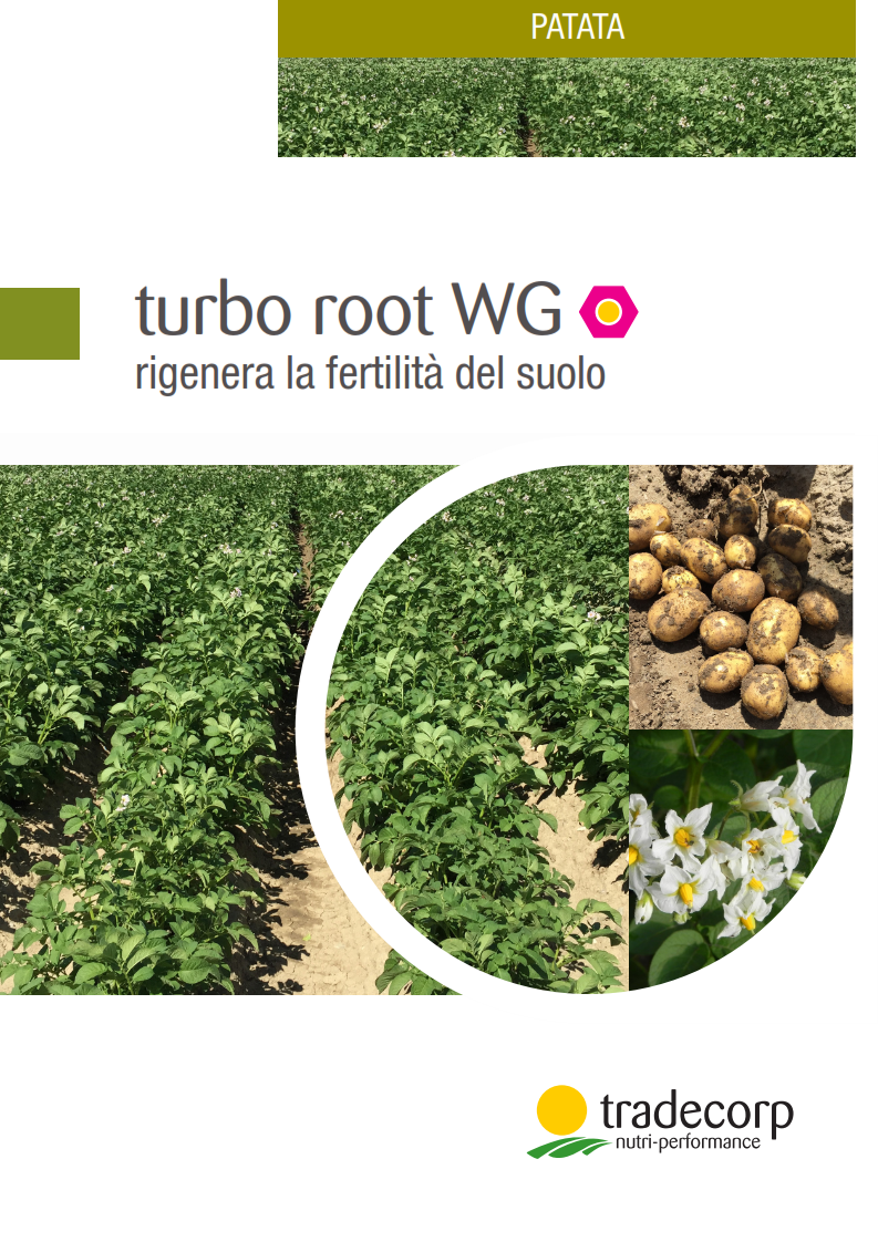 TURBO ROOT PATATE 2016 (Spread)_001