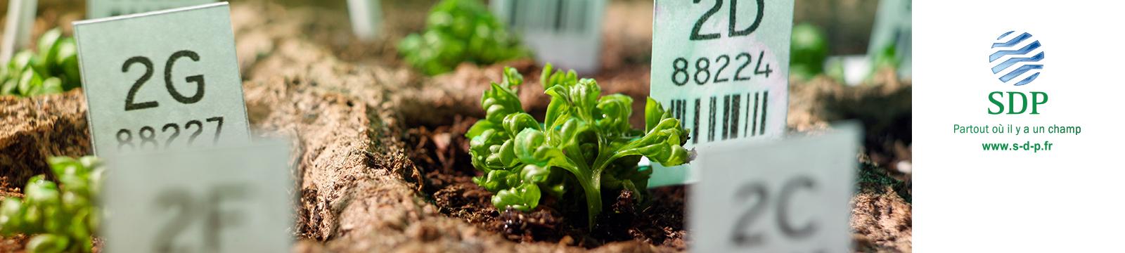 Tradecorp / Sapec Agro Business acquisisce la società francese SDP