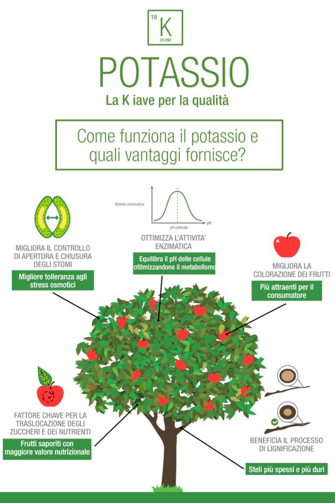 vantaggi del potassio nel melo